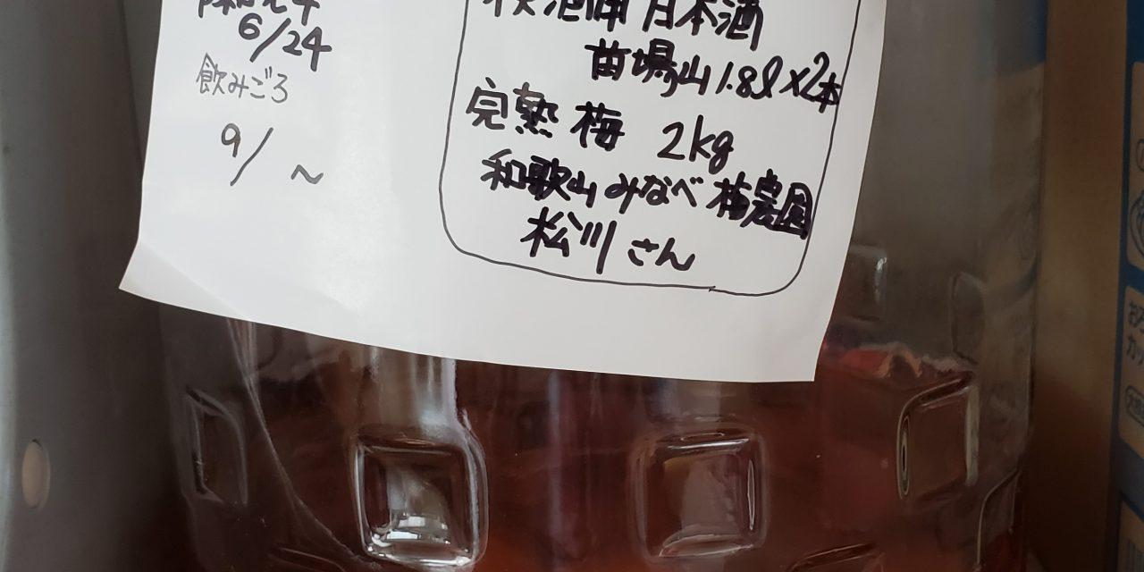 完熟梅で梅酒!!